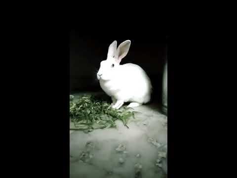 cute-rabbit-feeding-time