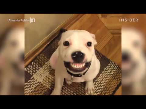 A rescue puppy is an internet star after learning to smile on command