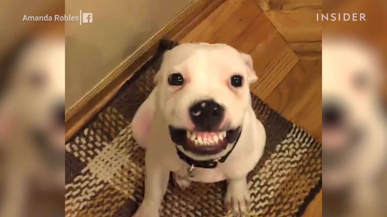 A Rescue Puppy Is An Internet Star After Learning To Smile