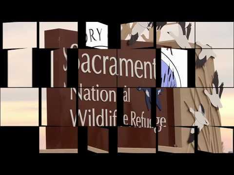 Sacramento National Wildlife Preserve 1