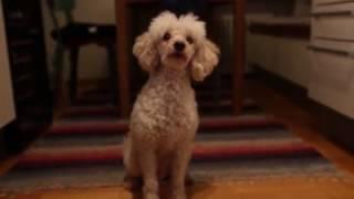 Koiran ruokarukous