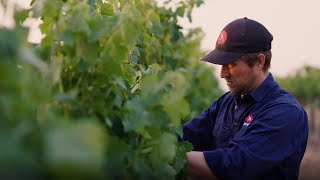ICC Sydney Wine Documentary 100% Local: Ed Swift from Printhie Wines
