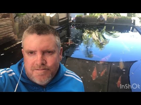 HAND SPAWNING YOUR GOLDFISH THE EASY WAY!