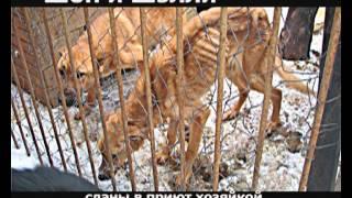 Cохраним жизнь бездомным животным 2