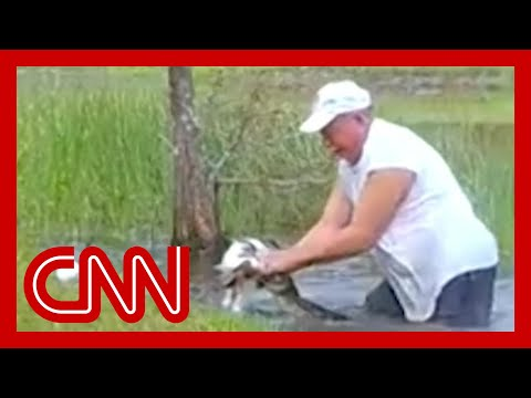See Florida Man Save Puppy from an Alligator!!! Never Loses His Cigar!