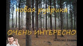 Интересное место выпуск №1 новосибирский дендропарк