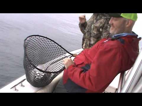 Flounder Offshore Report 4-17