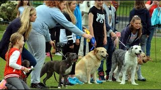 Fun Dog Show Queens Park Hoylake/meols