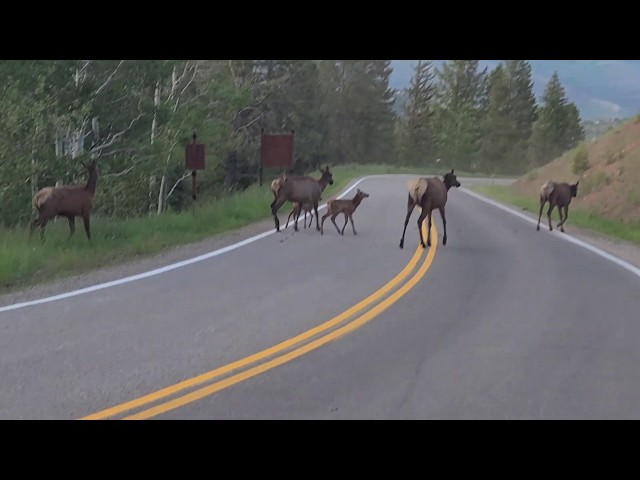Colorado Traffic Jam