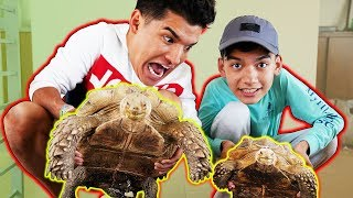 Cute Turtle Surprise On Cute Little Bro!!
