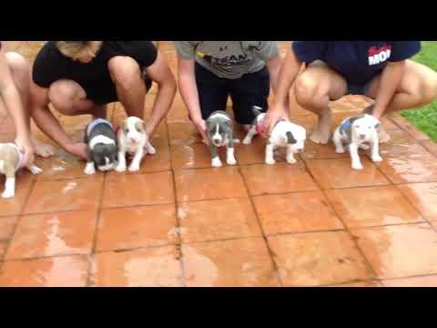 Hurricane Irma Puppy Race