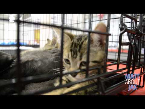 Watch MATT ABOUT JAX: Mega Pet Adoption Event at the Jacksonville Fairgrounds