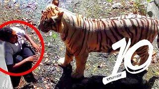 Zabójcze ataki zwierząt na ludzi!