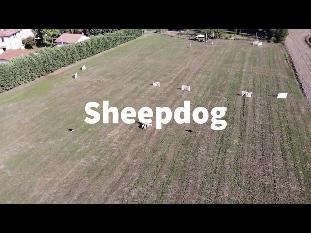 Sheepdog Centro Cinofilo FD Center