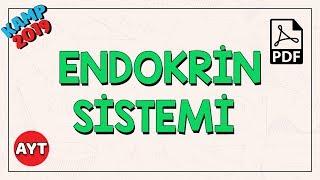 Endokrin Sistem   AYT Biyoloji