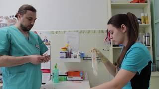 Стерилизация собак. Видеоурок для детей 11-14 лет