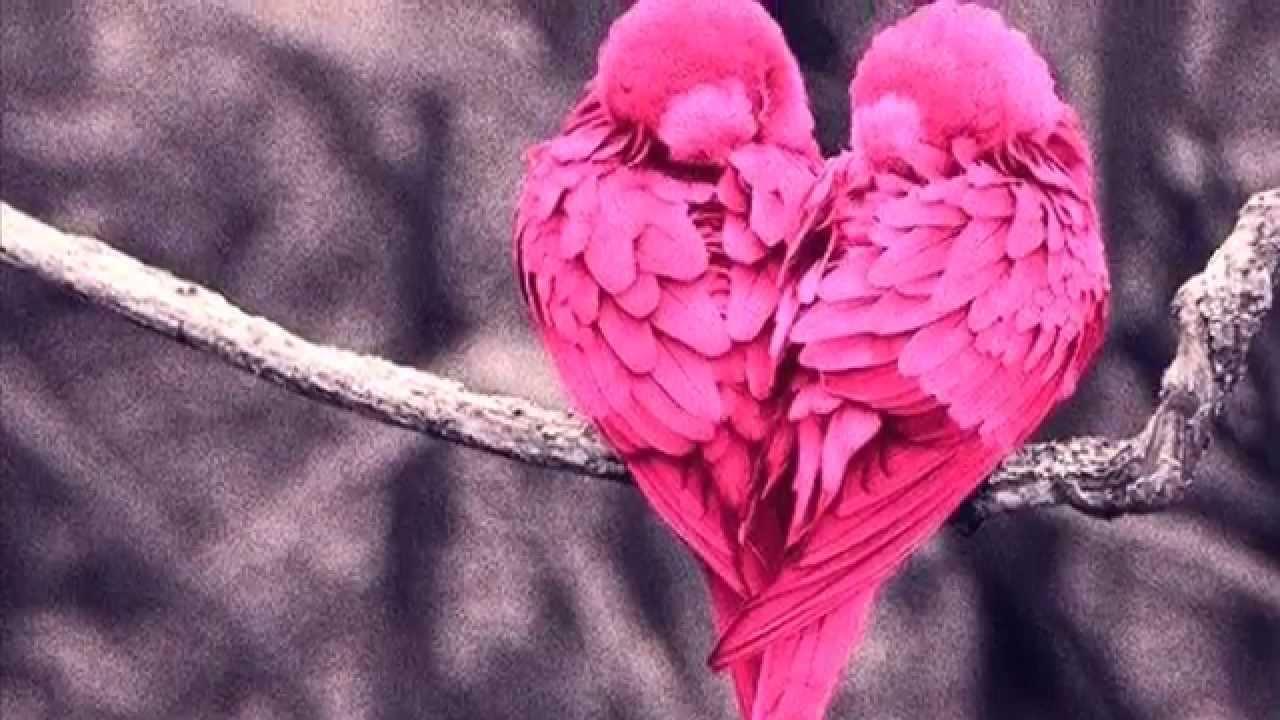 Beautiful Pink Birds Awesome Slideshow Hd