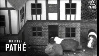Similar Games to Guinea Pig Town Suggestions