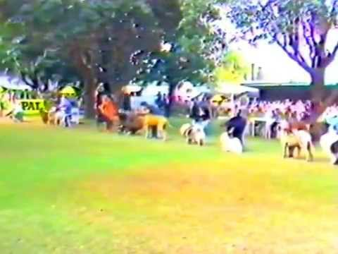 Sydney Royal General Specials 1982 Pt.1