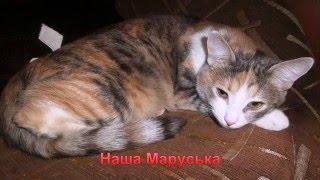 наша кошка Маруська