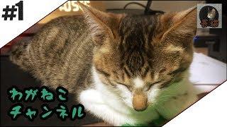 吾輩と猫たちの暮らしぶり。 ブログでも猫と暮らしてます。 吾輩と、猫...