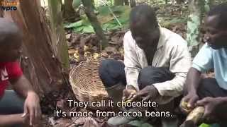 Mini Metropolis: Cacao farmers in Ivory Coast