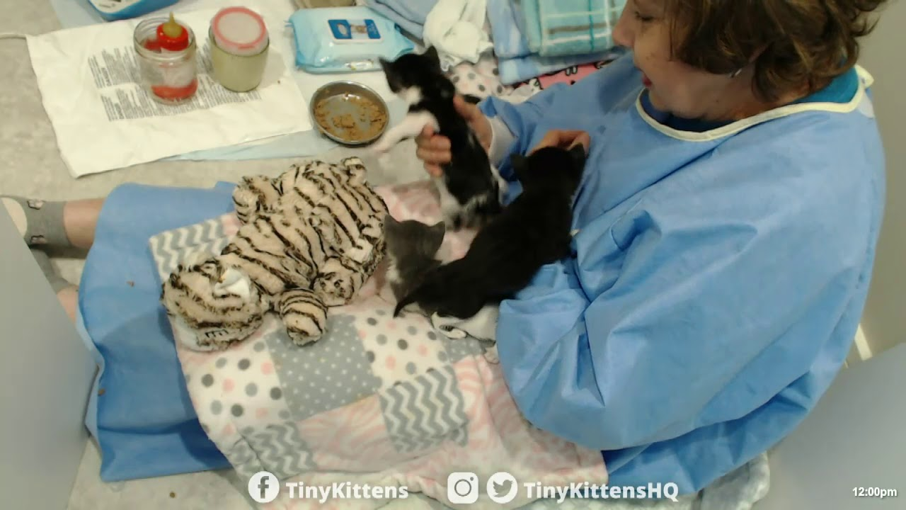 Bottle feeding and kitten burping with Auntie Suzanne!  TinyKittens.com