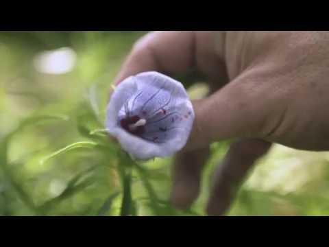Vidéo KLORANE BOTANICAL FOUNDATION - Web Série « Pourquoi protéger les plantes ? 🌱 »