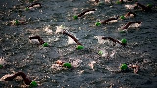 IRONMAN Zurich Switzerland 2015(IRONMAN Zurich Switzerland 2015 - Official IRONMAN TV Show., 2015-07-28T14:19:36.000Z)