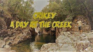 Crikey at the Creek, Whitsundays Australia