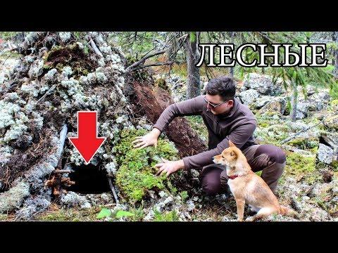 видео: МОЩНАЯ БАНЯ В ЛЕСУ СВОИМИ РУКАМИ БЕЗ СНАРЯЖЕНИЯ | diy bushcraft sauna