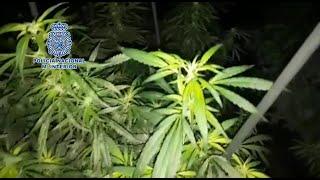 Policía desmantela dos plantaciones de cultivo indoor