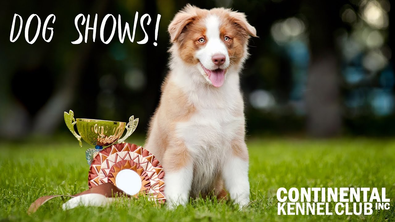Events and Shows - Continental Kennel Club