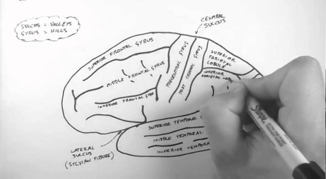 Brain Anatomy 1 Gross Cortical Anatomy Lateral Surface Youtube