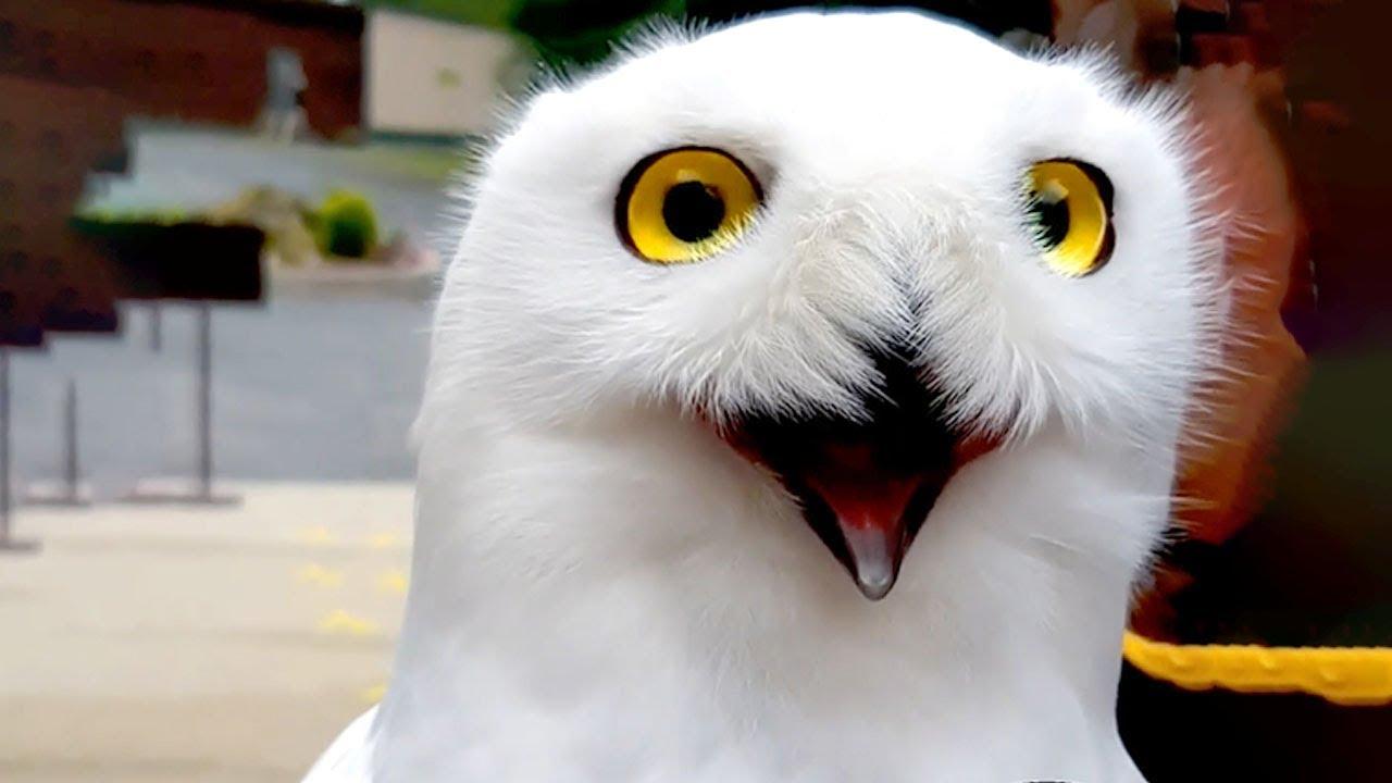 Cute Animal Bloopers & Reactions | Funny Pet Videos