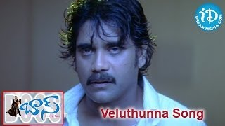 Veluthunna Song - Boss Movie Songs - Nagarjuna - Nayantara - Poonam Bajwa - Shriya