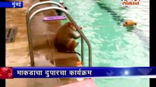 ek bandar swimming pool ke andar