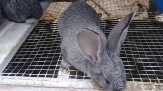 Обзор крольчат и их новое питание,крольчатам 41 день!!