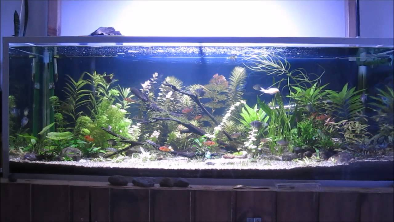 My Fresh Water Fish Tank 240 Litres Youtube