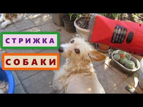 Как постричь собаку самим? Немецкая машинка TAUGER для стрижки собак