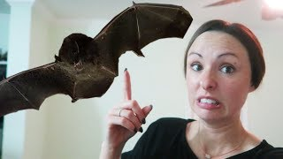 FOUND A LIVING BAT IN OUR HOUSE!!