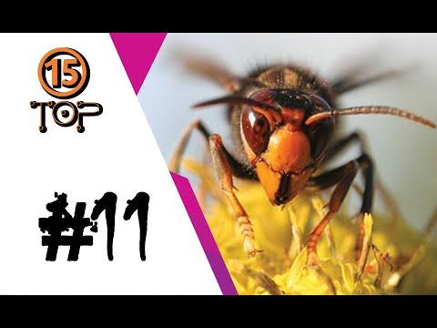 #11 : พยัคฆ์ติดปีก กรามฉีกล้างบาง