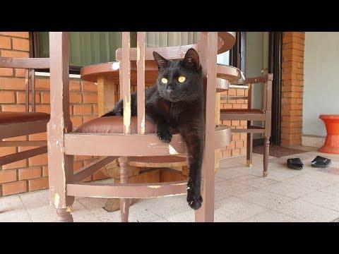 Relaxing Cat Video 53