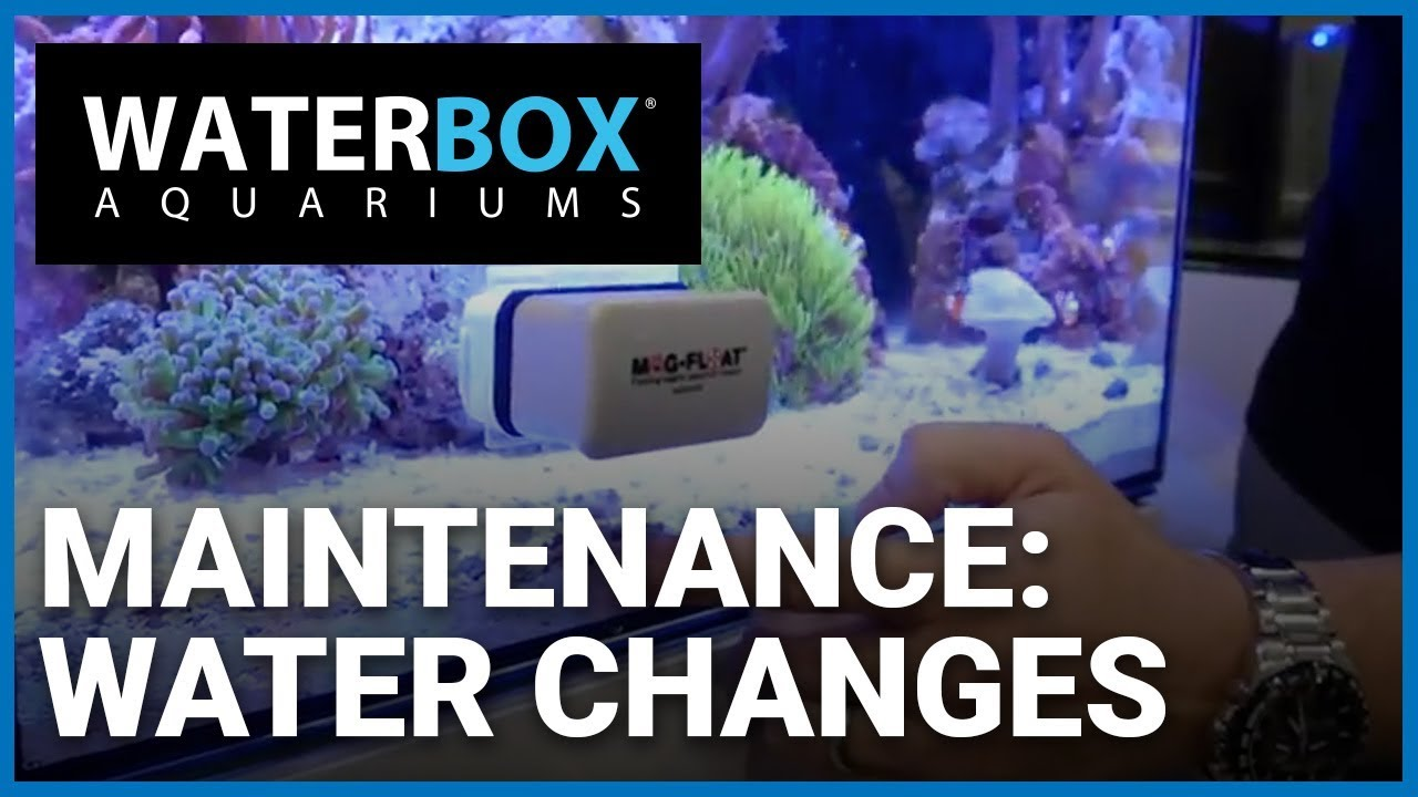 aquarium maintenance water changes in a waterbox cube 20 nano reef