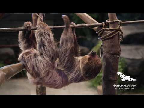 Interactive Sloth Encounter