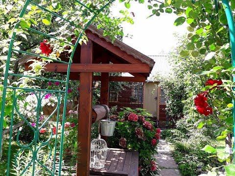 Наш сад в начале августа, что еще цветет и растет , посмотрим