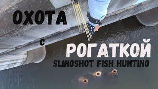 Рыбалка на сазана с рогаткой Наугад Fishing Slingshot