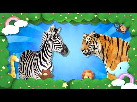 Угадай животное по окрасу Развивающие мультики для детей Монтессори