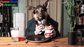 собака собирается на дачу(2)