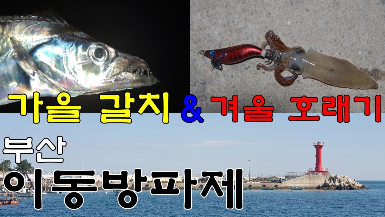 갈치, 호래기 핫플레이스 부산 기장 이동방파제 현장 탐방